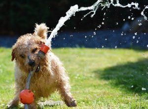 Jak zapewnić psu rozrywkę