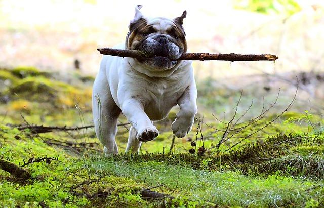 Jak zapewnić psu rozrywkę?